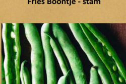 Fries Boontje - stam
