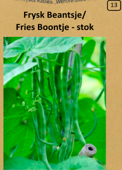 Fries Boontje - stok