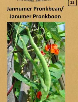 Janumer Pronkboon