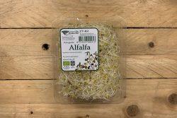 Alfalfa - Peuleschil