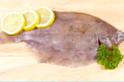 Tongschar  Goede Vissers
