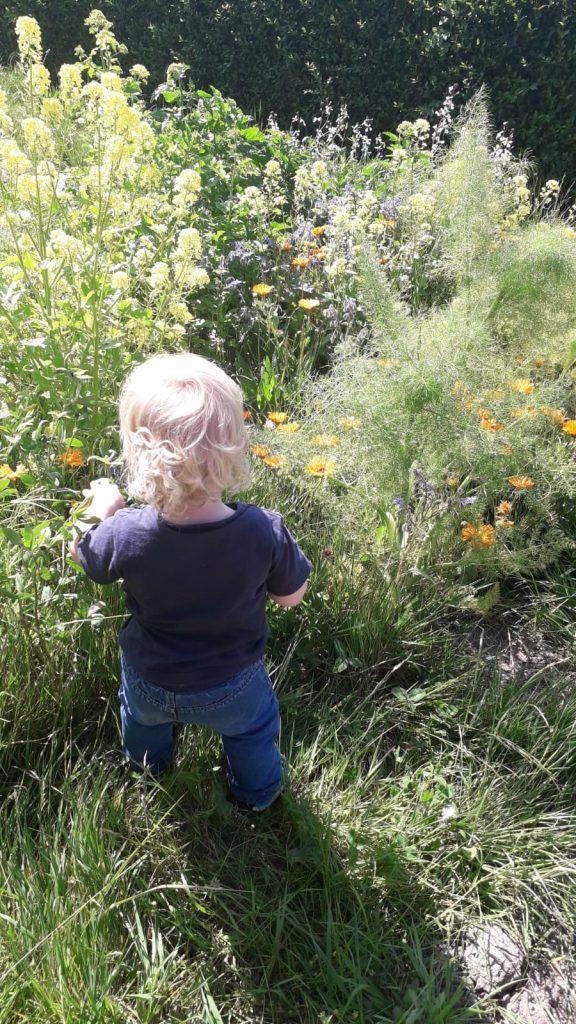 Wilde bloemenperk