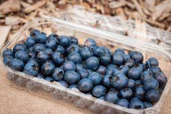 Blauwe Bessen (klein)  Sparkberry ()