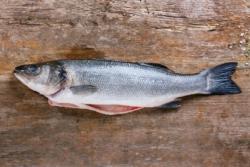 Zeebaars  Goede Vissers