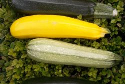 Courgette Mix