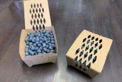 Blauwe Bessen Nieuw  Sparkberry